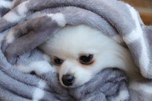 寒くなりましたね・・・